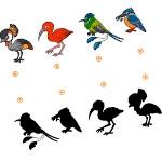 Найди тени птиц