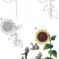 Как нарисовать подсолнух