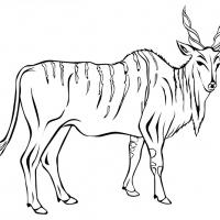 Раскраска Антилопа