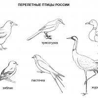 Раскраски Перелетные птицы