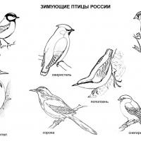 Раскраска Зимующие птицы