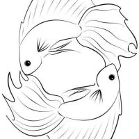 Раскраска Бойцовская рыба