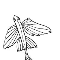 Раскраска Летучая рыба