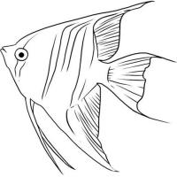 Раскраска Рыба Ангел