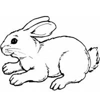 Кролик раскраска