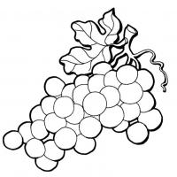 Раскраска Виноград
