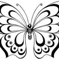 Картинки бабочки раскраски
