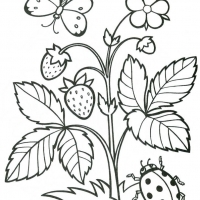 Раскраска Растения