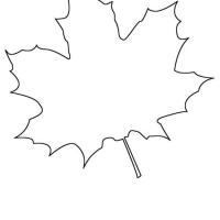 Раскраска Кленовый лист