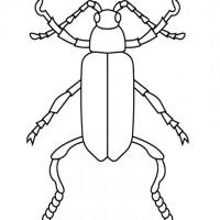 Раскраска жук