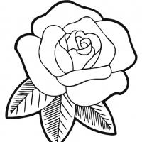 Раскраска цветы крупные