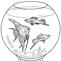 Раскраска аквариум