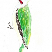 Детские рисунки птиц
